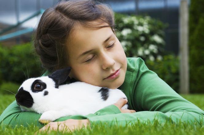 Карликовый кролик — что нужно знать? Советы, информация, аксессуары для домашнего кролика